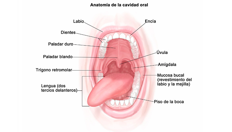 cancer-precancer-oral-clinica-lazaro